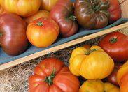 Heirloom-tomatoes-772859