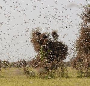 2208_perfect-swarm-4_04700300
